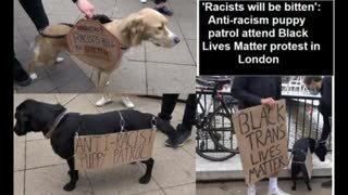 'Racists will be bitten' puppy patrol attends (((jewish funded blm))) protest