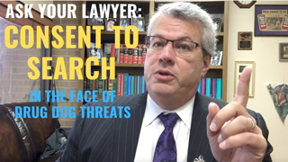 """Consent to Search & Drug Dogs 