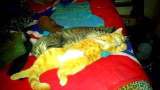 2 cat friends - Rocky and Goldie June 20th, 2021
