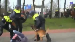 Bring a Baton.The Dutch just like Palestine When Police & Their Dogs Brutally Attacked Protestors In Holland In April 2021