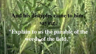 """""""Wheat & Tares - The Hive Mind"""" (Be4TheFire.com Video #11)"""