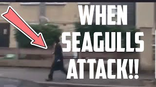 Jewish Man ATTACKED By Seagulls in London