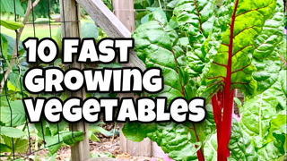 10 Fast Growing Vegetables You Can Harvest in 30 Days Or Less