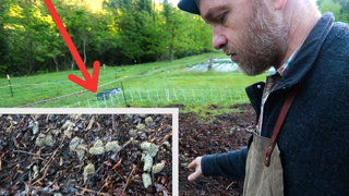 Too much Pig Poop: What to do with it Now