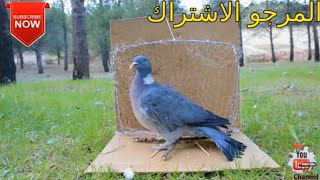 How To Make A Net Bird Trap - Trapping Birds With Net Trap
