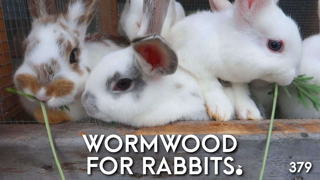 Natural Rabbit Care: Wormwood for Deworming and Parasite Control
