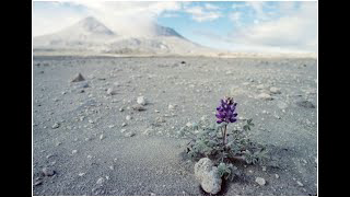 Volcano Tuesdays presents: Soil from Scratch! How plants regrow after a volcanic eruption.