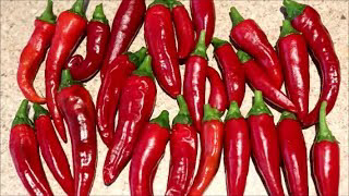 How to Grow Peppers from Seed (Cayenne)
