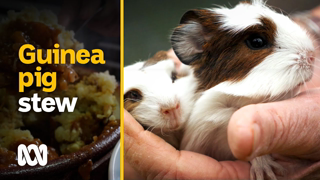 Eating guinea pigs: the 'more ethical and sustainable meat' | Food & Recipes | ABC Australia